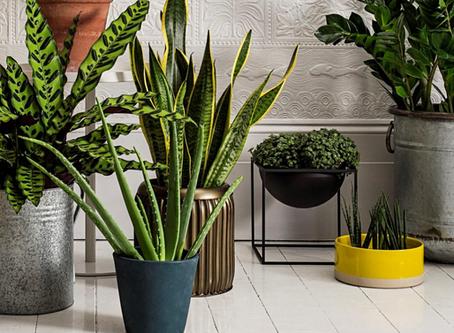 צמחי בית בעיצוב פנים