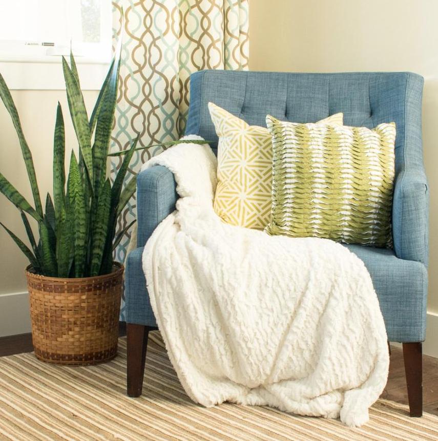 עציץ שנועד להדגיש רהיט בבית