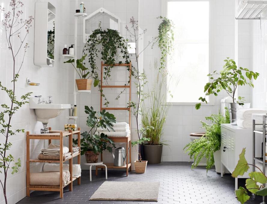 צמחים במקלחת