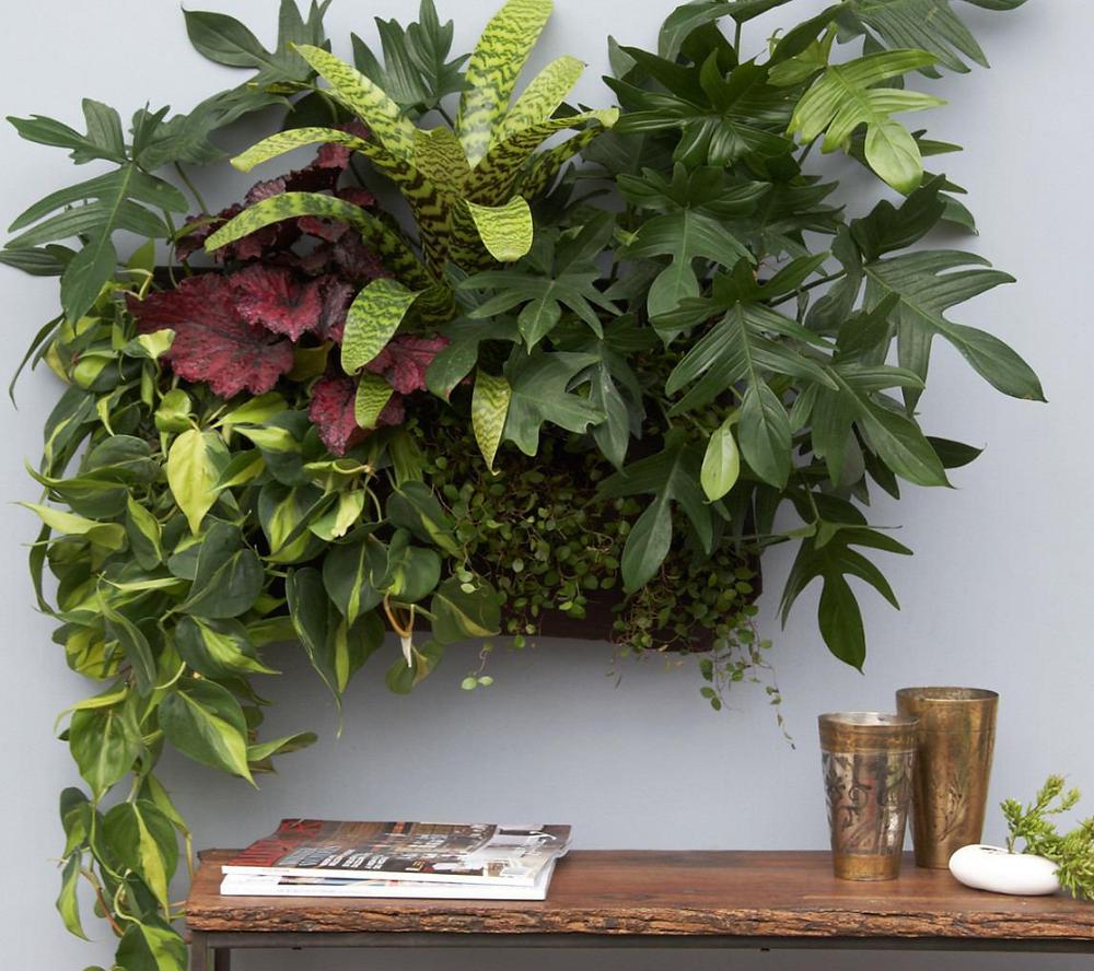 תמונת צמחים