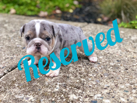 Meet Puppy Corra - Mini
