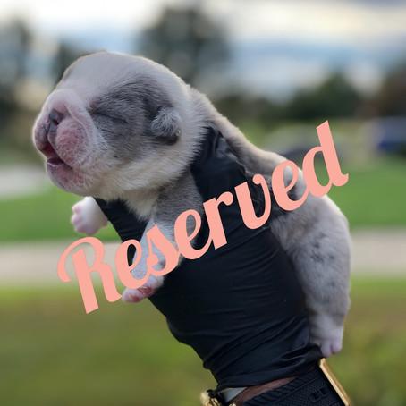 Meet Puppy D - Mini