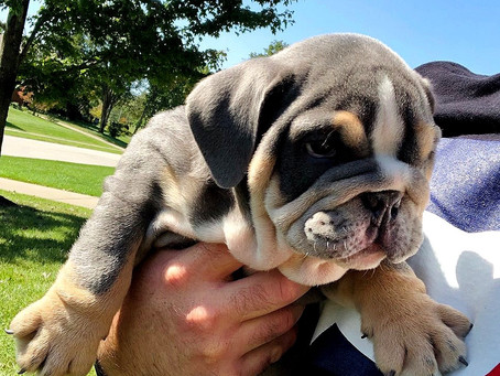 Meet Milo