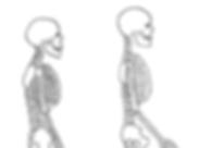 Skelett_seitlich_©Carla_edited.png