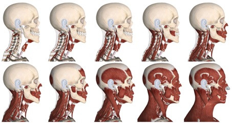 Halsmuskeln, verschiedene Schichten