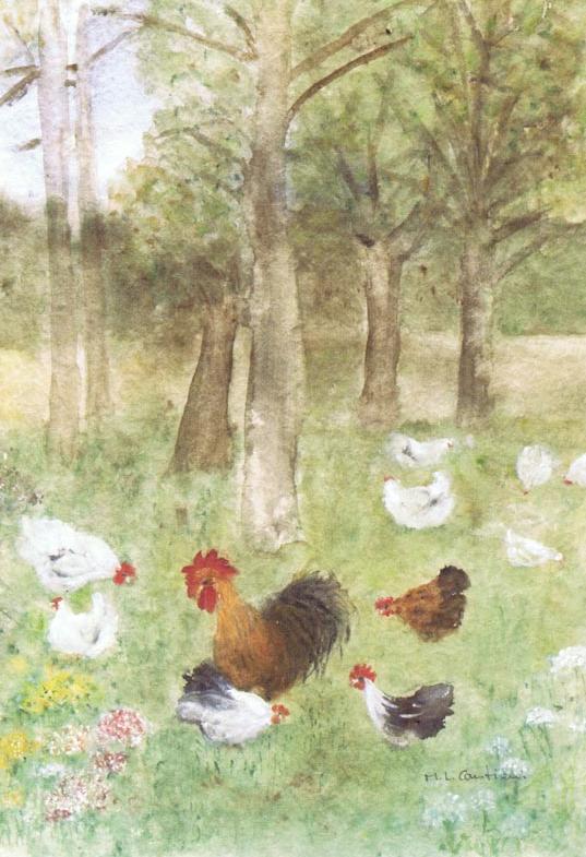 Hühner_im_Freien
