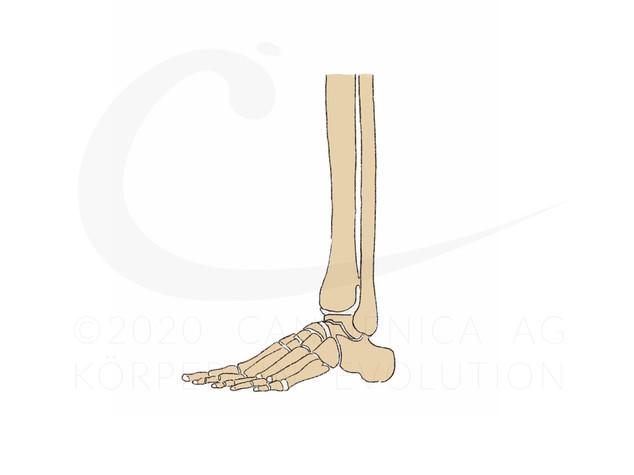 Die Füße flex