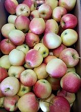 Gala Apples .jpg