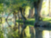 Paysage du marais poitevin, jolie canal serpentant entre les trênes têtard et les peupliers.
