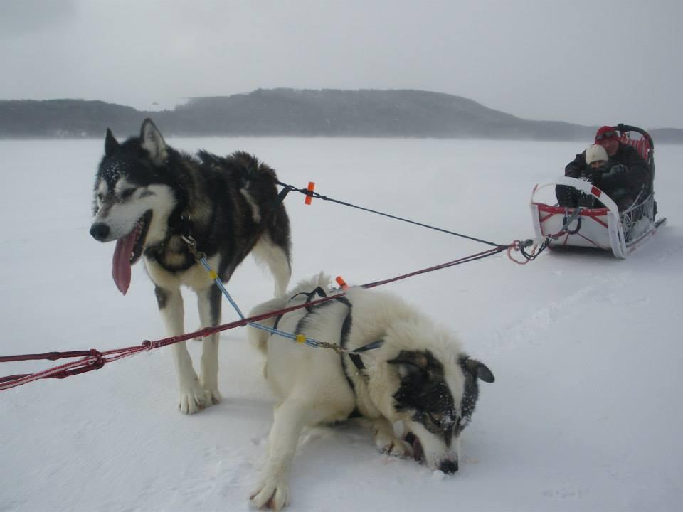 Activité de traîneau à chien
