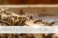 race abeille.jpg