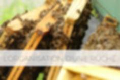 organisation ruche.jpg