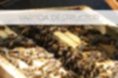 varroa.jpg