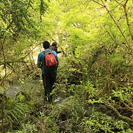 investigadores en bosque_Teresa Santelic