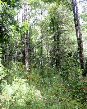 bosque.jpg