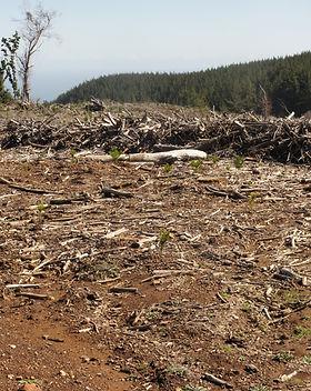 deforestacion parte1.jpg