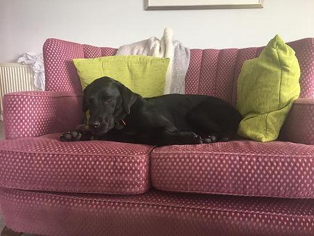jackson on sofa.jpg