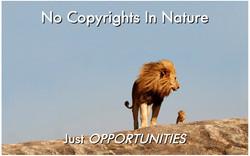 No Copyrights [37 pgs]