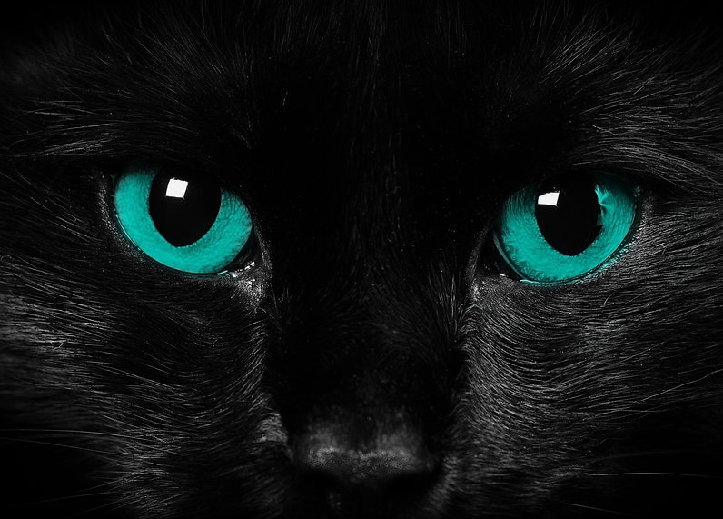 Black cat green eyes