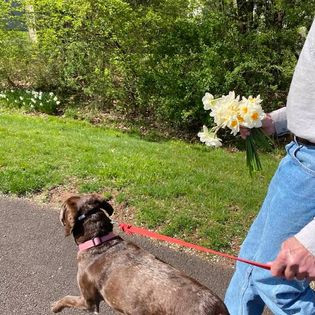 Lessons in Mindfulness: Am I Walking the Dog or Walking the Smartphone?