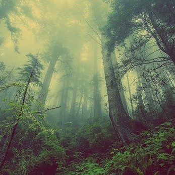 Let Me Sit in the Woods: A New Poem