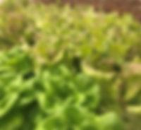 "indoor farm owner AnchorageGreens ""anchorage greens"""