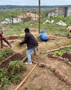 IMIFINO Community Gardens in KZN.jpg