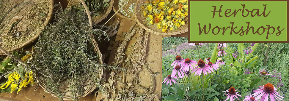 Herbal Workshops KZN South Africa-Moontr