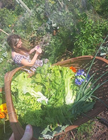 Moontree Organics Herb Farm- KwaZulu-Nat