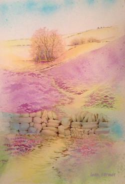 Digley Walk