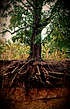 roots and foundations_edited_edited_edit