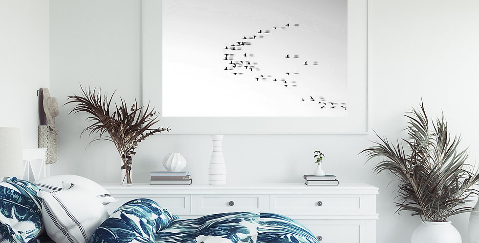 Long Island Seagulls | Photo