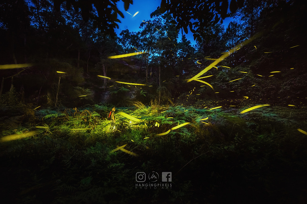 fireflies glowing into the night