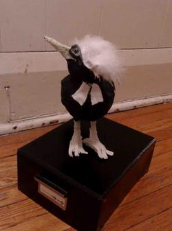 Barrister Bird