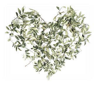 Eucalyptus Leaves - Heart Shape