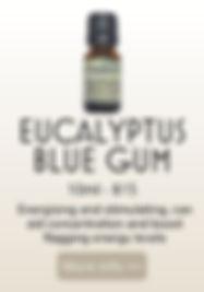 EUCALYPTUS BLUE GUM .jpg