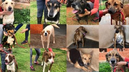 Cuidadora morre e família busca lares para 44 cães