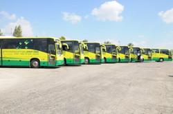 מיתוג - אוטובוסים
