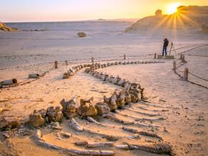 עמק הלוויתנים במדבר של מצרים