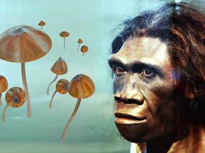 תיאורית הקוף המסטול