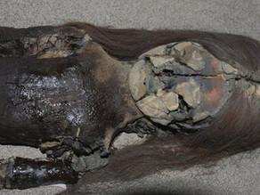 צ'ינצ'ורו - המומיות הקדומות ביותר שהתגלו בעולם