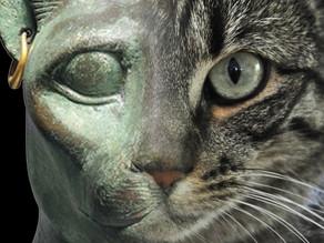 החתול - הרבה יותר מהיסטוריה מיתית