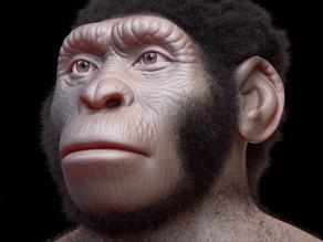 מהו המין בן ה-356,000 שנה שהתגלה במערה בדרום אפריקה?