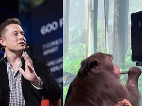 חברת Neuralink של אילון מאסק פרסמה סרטון של קוף שמשחק משחקי וידיאו עם מוחו