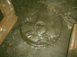 גלגל אניגמטי קדום בן 300 מיליון שנה
