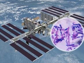 חיידקים לא ידועים למדע התגלו בתחנת החלל הבינלאומית