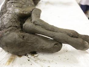 דם נוזלי נמצא בסייח חנוט בן 42,000 שנה