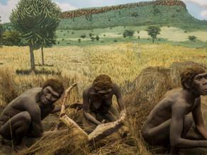 כלי אבן בני 2 מיליון שנה נחשפו בטנזניה