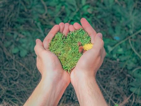 Consciência ambiental