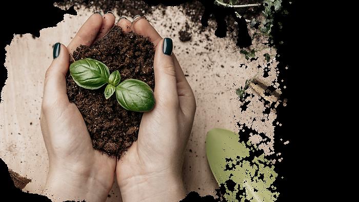 plant hands.png